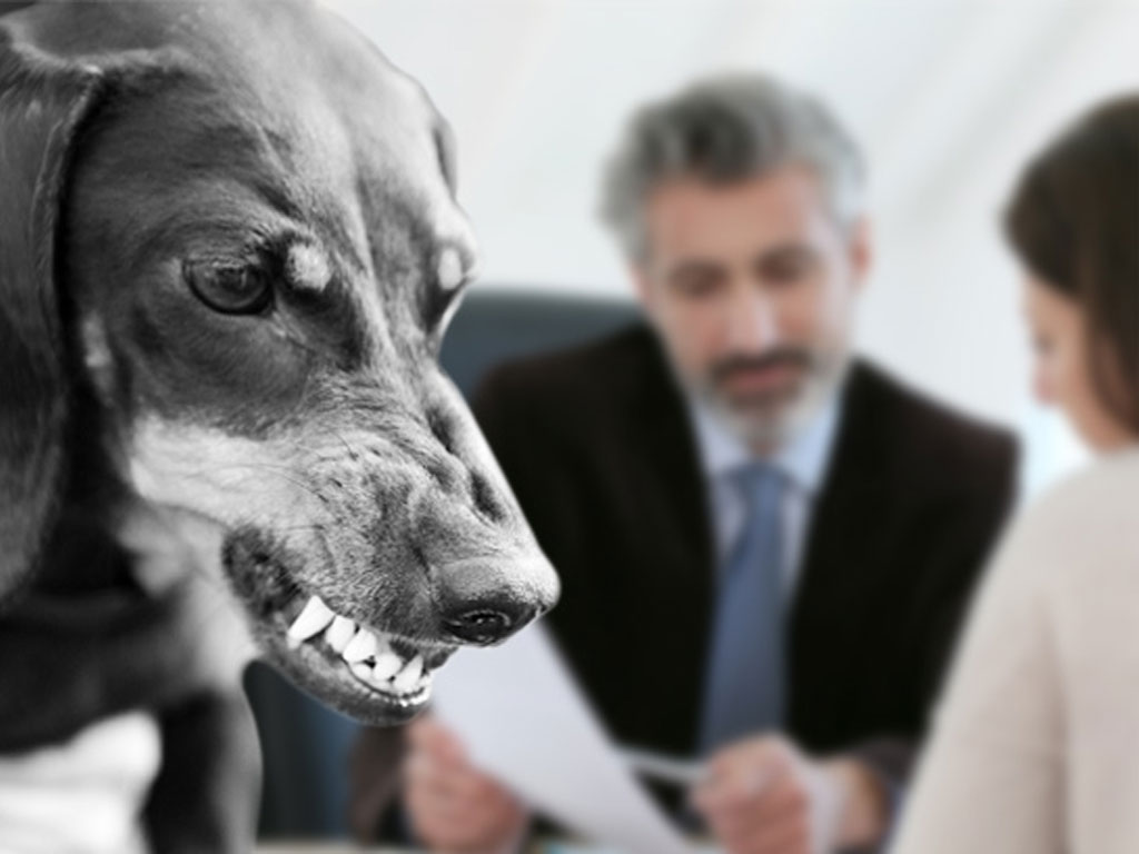 Understanding the Intricate Details of a Dog Bite Lawyer